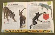 Endangered Animals Dictionary (11)