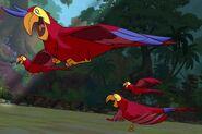 Red-Yellow-Blue-Bird-jungle-book-2