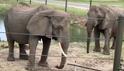 Six Flags Elephants