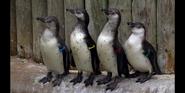 TSLoTZ Penguins