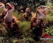 Velociraptors-0