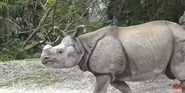 Zoo Miami One Horned Rhino