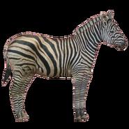 Zoo Tycoon Chapman's Zebra