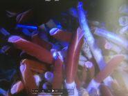 AOFD Giant Tube Worm