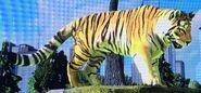 Amur Tiger ZTX