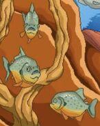 BTKB Piranhas