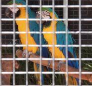 Blue-and-yellow macaw in arizona's wildlife world zoo