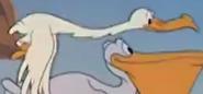 G-1941-04-18-bird07