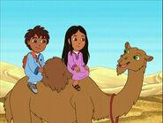 GDG Camel