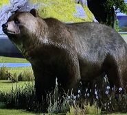 Kodiak Bear ZTX