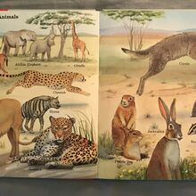 My First Book of Animals from A to Z (20).jpeg