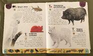 Pet Dictionary (24)