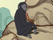 Rileys Adventures Bonobo