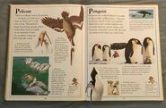 The Kingfisher First Animal Encyclopedia (51)