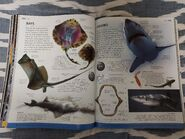 Animal (DK Online) (57)