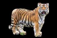Bengal Tiger Mod