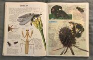 DK Encyclopedia Of Animals (96)