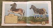 Gone Forever! An Alphabet of Extinct Animals (12)