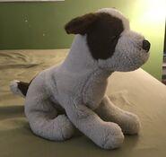 Jill the Jack Russell Terrier