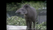 London Zoo Tapir