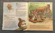 My First Book of Animals from A to Z (26)