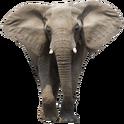 NatureRules1 African Elephant
