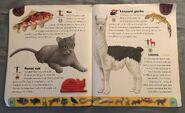 Pet Dictionary (13)