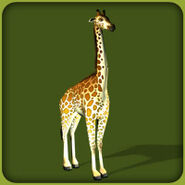 Reticulated Giraffe (Blue Fang)