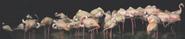 Singapore Zoo Night Safari Flamingos