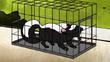 Skunk bth