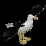 Zoo Tycoon Kelp Gull