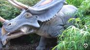 Chester Zoo Chasmosaurus
