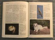The Kingfisher Illustrated Encyclopedia of Animals (172)