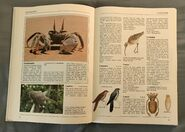 The Kingfisher Illustrated Encyclopedia of Animals (44)