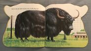 The Zoo Book (5)