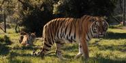 WBAZ Tiger