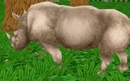 White-rhinoceros-zoo-empire