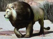 Barbary Lion ZTX