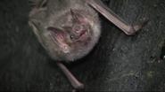 Cincinnati Zoo Vampire Bat