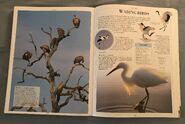 DK Encyclopedia Of Animals (164)
