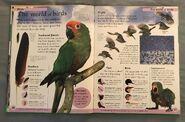 DK First Animal Encyclopedia (23)