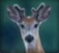 Deer-disneythinkfast