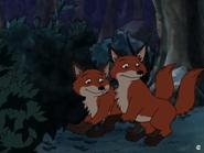 Little Bear Foxes