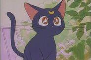 Luna Angry