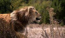 NG.Prehistoric.Predators.01of03.Sabertooth.Dvdrip.XviD.MP3.LionsDen.avi snapshot 02.54 -2016.10.07 08.43.42-.jpg