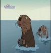 TWT Sea Otter
