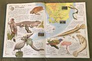 The Animal Atlas (5)