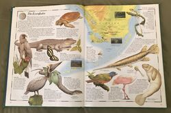 The Animal Atlas (5).jpeg