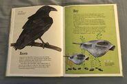 The Dictionary of Ordinary Extraordinary Animals (44)