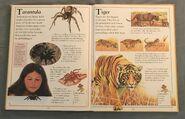 The Kingfisher First Animal Encyclopedia (70)